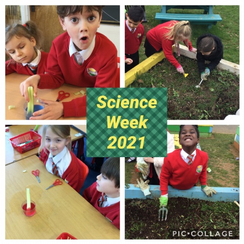 Year 3 Investigate Water Uptake in Plants